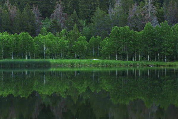 Photograph - A Theme Of Green by David Andersen