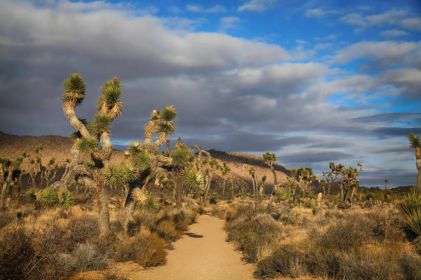 Joshua Tree National Park Wall Art - Photograph - A Thousand Words Are Not Enough by Laurie Search