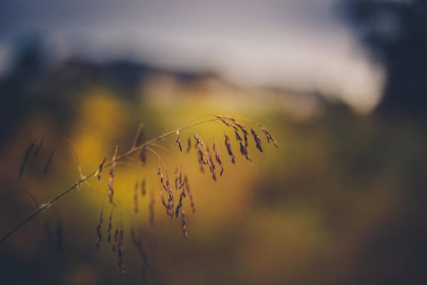 Dof Photograph - A Time To Be by Shane Holsclaw