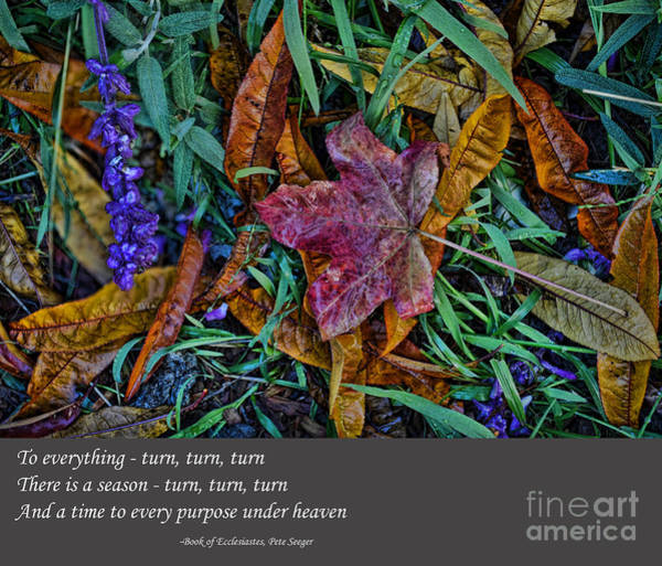 Wall Art - Photograph - A Time To Every Purpose Under Heaven by Jim Fitzpatrick