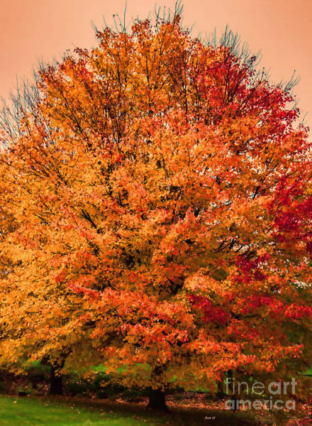 Photograph - A Tinge Of Red Fall Tree by Roberta Byram