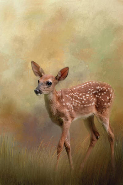Photograph - A Tiny Bit Of Joy Deer Art by Jai Johnson