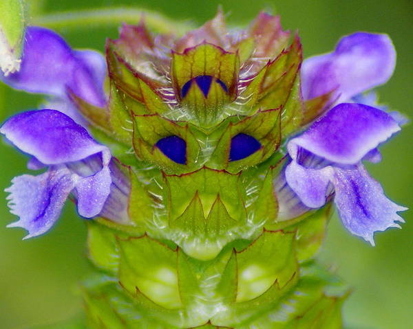 Photograph - A Tiny Flower King by Ben Upham III