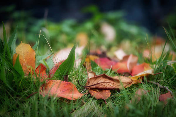 Photograph - A Touch Of Fall by Jeremy Lavender Photography