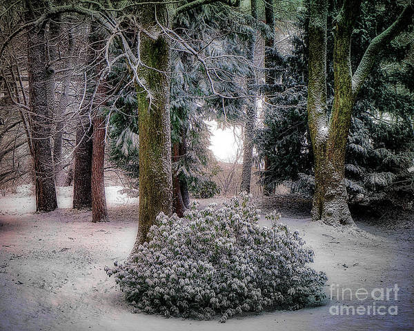 Photograph - A Touch Of Frost by Edmund Nagele