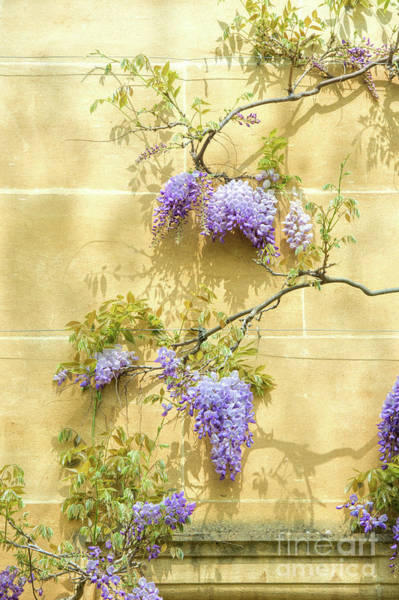 Wall Art - Photograph - A Touch Of Lilac by Tim Gainey