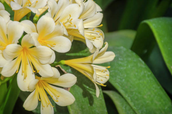 Photograph - A Touch Of Spring by Bill Cannon