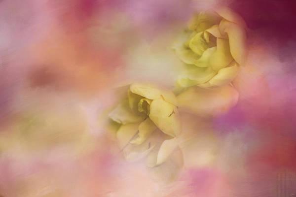 Photograph - A Touch Of Spring Flower Art by Jai Johnson
