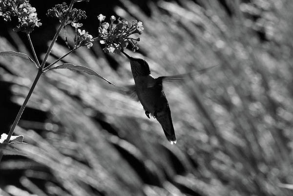 Photograph - A Touch Of White by Lori Tambakis