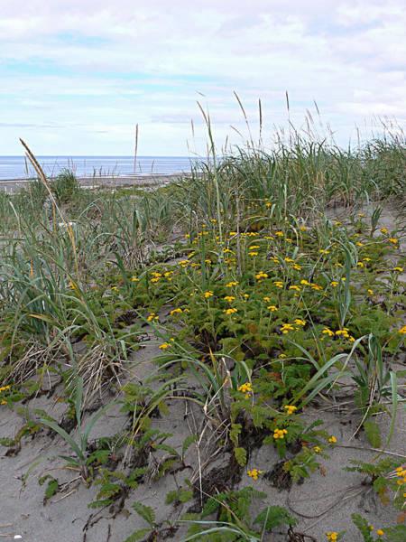 Photograph - A Touch Of Yellow Haida Gwaii Bc by Barbara St Jean