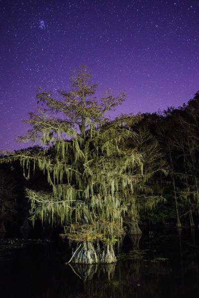 Wall Art - Photograph - A Tree And North Eastern Starry Sky - A Portrait Of A Bald Cypress by Ellie Teramoto