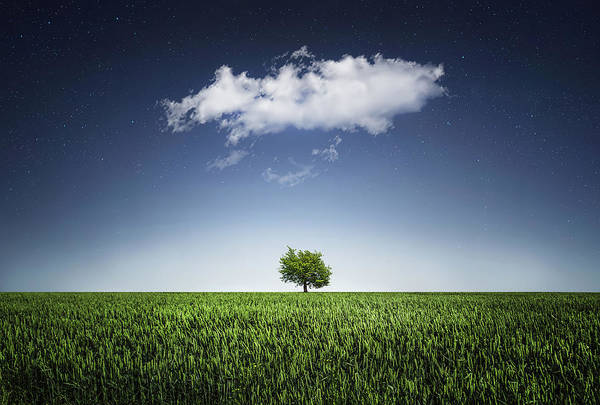 Wall Art - Photograph - A Tree Covered With Cloud by Bess Hamiti