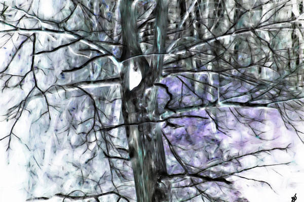 Photograph - A Tree In An Arkansas Forest by Gina O'Brien