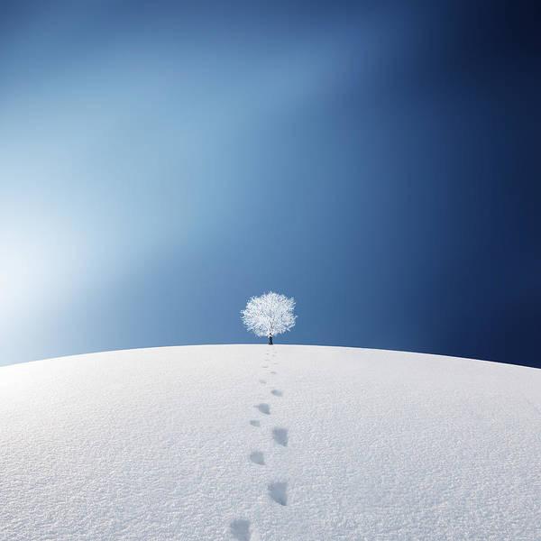 Ski Tracks Wall Art - Photograph - A Tree In The Field by Bess Hamiti