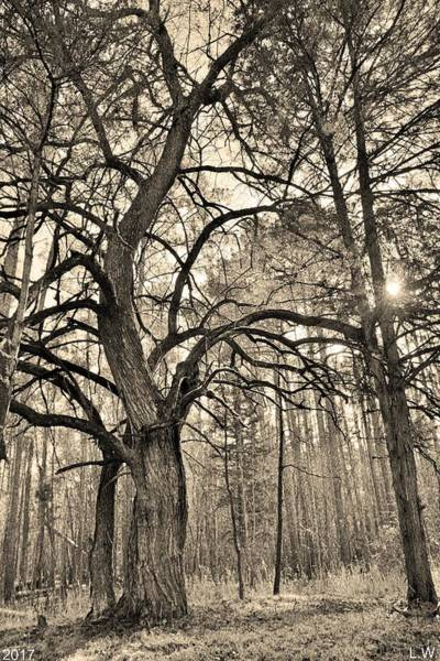 Photograph - A Tree In The Forest Vertical Black And White by Lisa Wooten