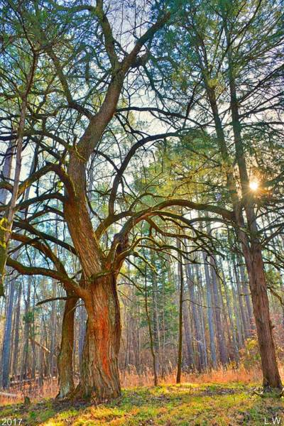 Photograph - A Tree In The Forest Vertical by Lisa Wooten