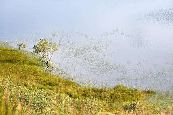 Photograph - A Tree In The Lake Of The Scottish Highland by Dubi Roman