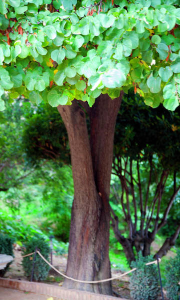 Wall Art - Photograph - A Tree Lovelier Than A Poem by Madeline Ellis