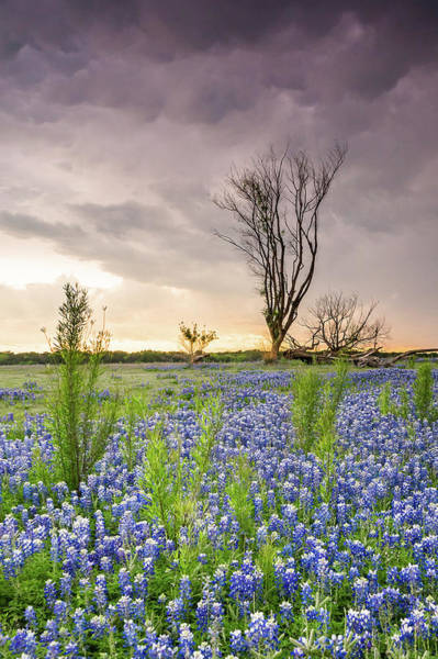 Wall Art - Photograph - A Tree Of Wildflower Field Under Stormy Clouds - Texas by Ellie Teramoto