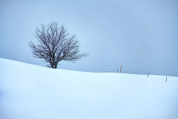 Photograph - A Tree On The Ridge by Rick Berk
