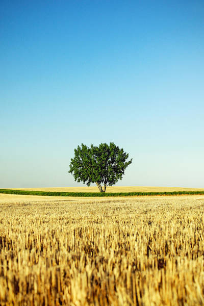 Single Leaf Wall Art - Photograph - A Tree Stands Alone by Todd Klassy