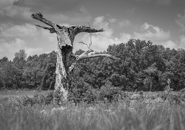 Wall Art - Photograph - A Tree With A Face 2017-1 by Thomas Young