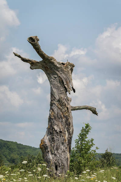 Wall Art - Photograph - A Tree With A Face 2017-3 by Thomas Young