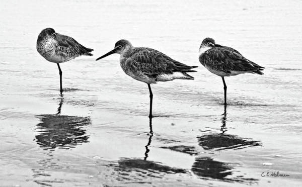 Photograph - A Trio - Bw by Christopher Holmes