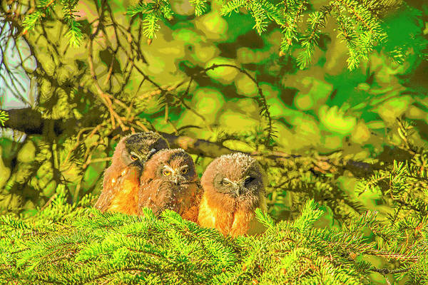 Wall Art - Photograph - A Trio Of Fledglings Abstract by Tim Grams