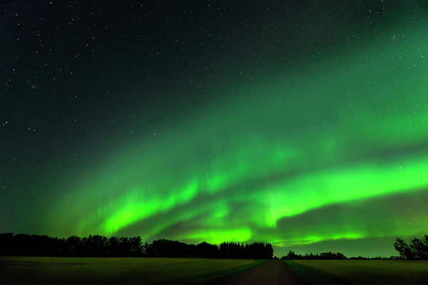 Photograph - A Tsunami Of Green by Dan Jurak