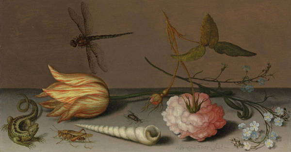 Tulip Bloom Painting - A Tulip, A Carnation, Spray Of Forget-me-nots, With A Shell, A Lizard And A Grasshopper, On A Ledge by Balthasar van der Ast