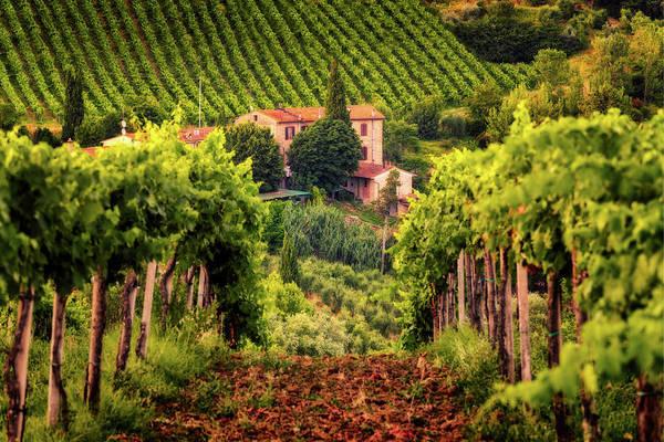 Photograph - A Tuscany Vineyard - Italy by Nico Trinkhaus
