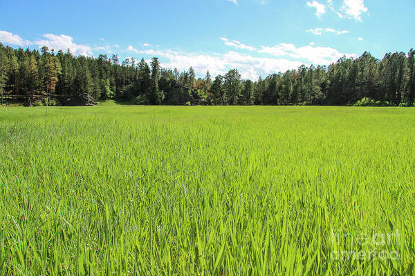 Photograph - A Very Green Meadow by Bill Gabbert