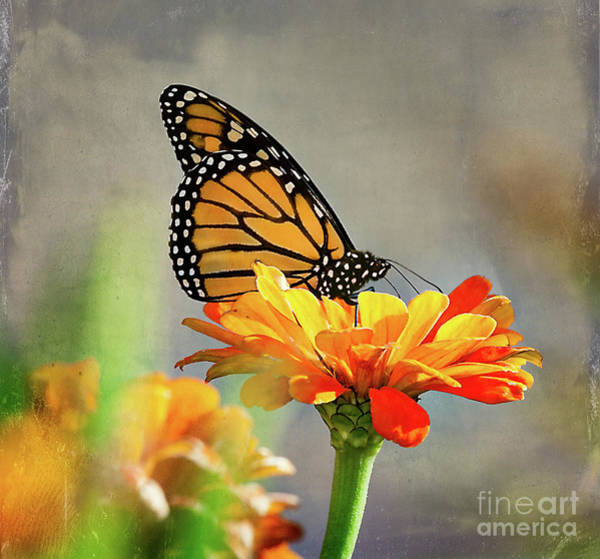 Photograph - A Very Late Visitor To The Garden by Ann Jacobson