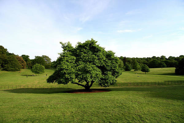 Photograph - A View From Kenwood House by Aidan Moran