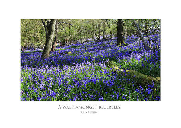 Digital Art - A Walk Amongst Bluebells by Julian Perry