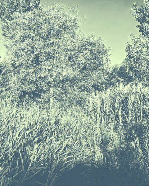 Photograph - A Walk Amongst The Reeds Cool Gray by David King