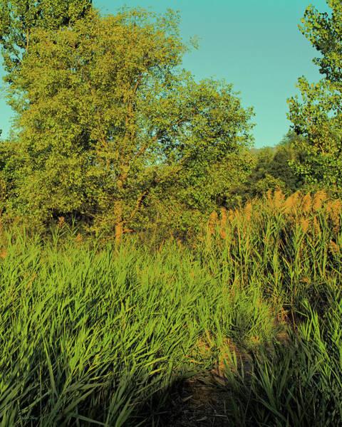 A Walk Amongst The Reeds Art Print