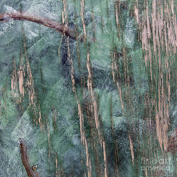 Photograph - A Walk In The Forest by Patti Schulze