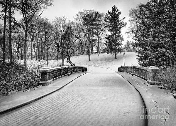 Photograph - A Walk In The Snow by Alissa Beth Photography