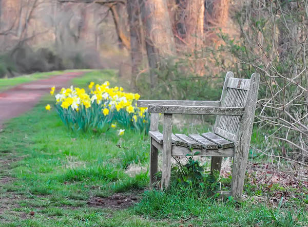 Dafodil Photograph - A Walk In The Springtime  - Bucks County Pa by Bill Cannon