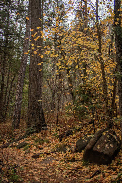 Photograph - A Walk In The Woods 2 by Teresa Wilson