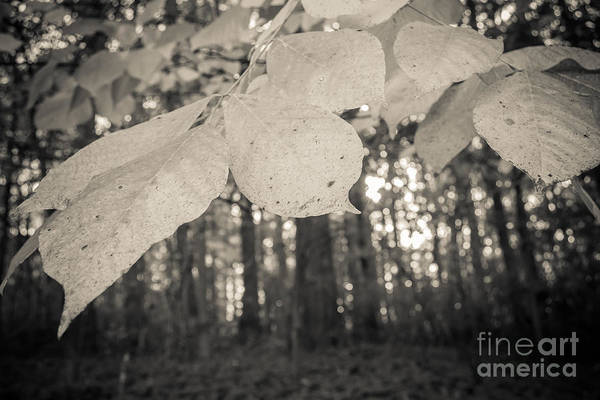 Photograph - A Walk In The Woods by Ana V Ramirez