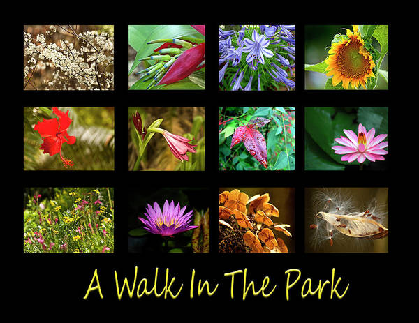 Photograph - A Walk In The Park by Carolyn Marshall