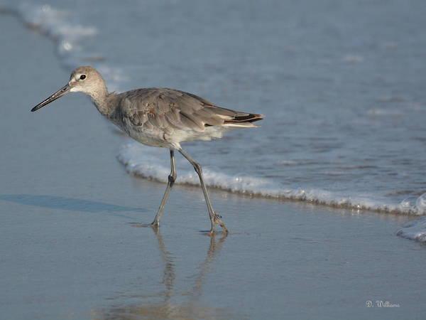 Photograph - A Walk On The Beach by Dan Williams