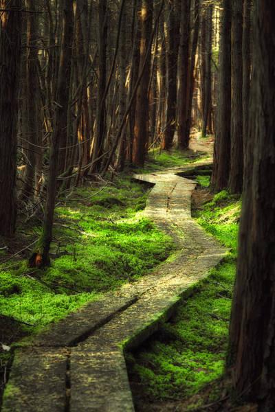 Photograph - A Walk Through The Bog by Robert Clifford