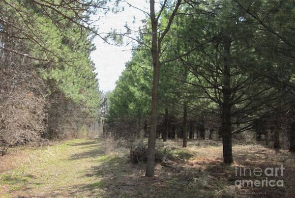 Photograph - A Walk Through The Pines by Kathie Chicoine