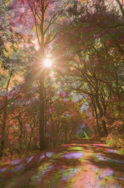Photograph - A Walk Through The Rainbow Forest by Beth Sawickie