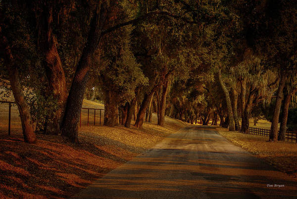 Photograph - A Warm Lignt On Willow Creek Road by Tim Bryan