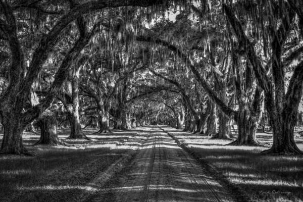 Photograph - The Majestic Way Live Oaks Tomalley Plantation South Carolina by Reid Callaway
